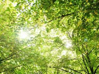 depositphotos_88223950-stock-photo-green-trees-background